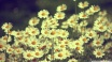 vintage-daisies-photography_00449004